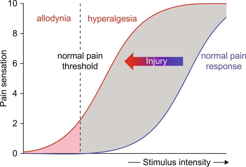 A figure depicting the change in in the relationship between stimulus intensity and pain sensation